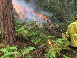 Australia has faced immense challenges due to dangers and hazards caused by bushfire and wildfire in their forests